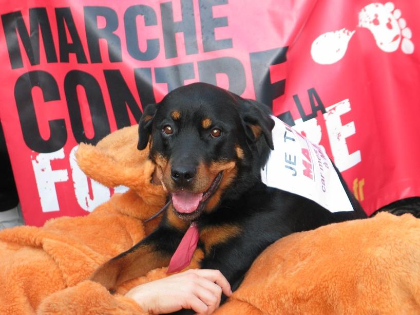 07 - Marche contre la fourrure - Paris 19 novembre 2011. 894647IMG6638