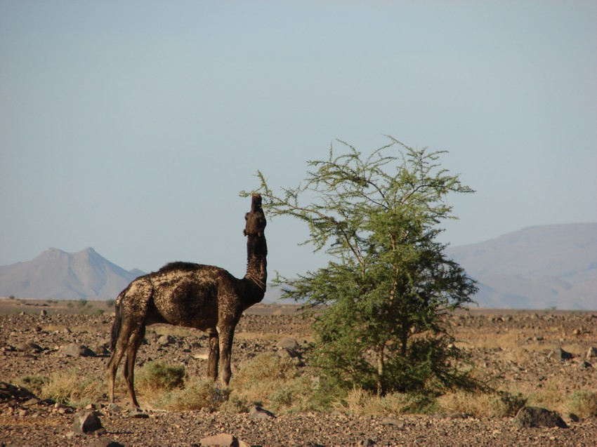 retour maroc 2012 - Page 2 895573129