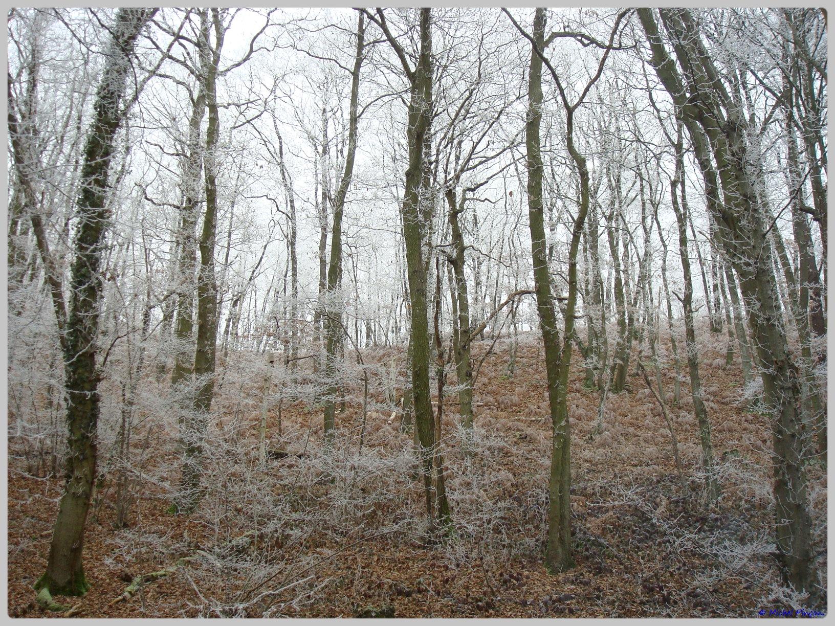 [fil ouvert] la forêt dans tous ses états - Page 12 895968DSC011768
