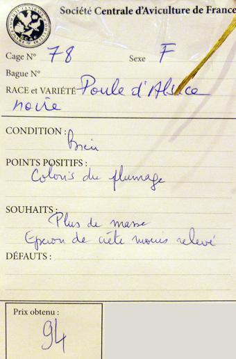 2014 - salon de l'Aviculture de Paris du 22/02/2014 au 02/03/214 - Page 3 898772P1130317