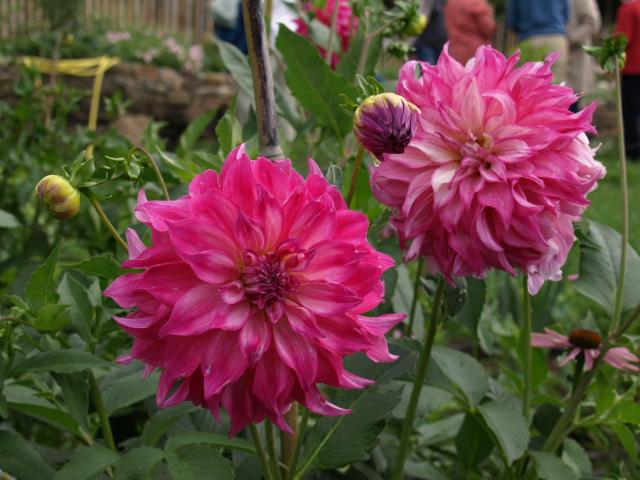 le jardin des plantes du mourot 901270P7202040