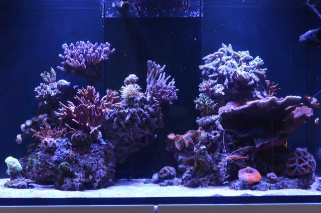 Re: Redg's paradise reef 904322DSC3230