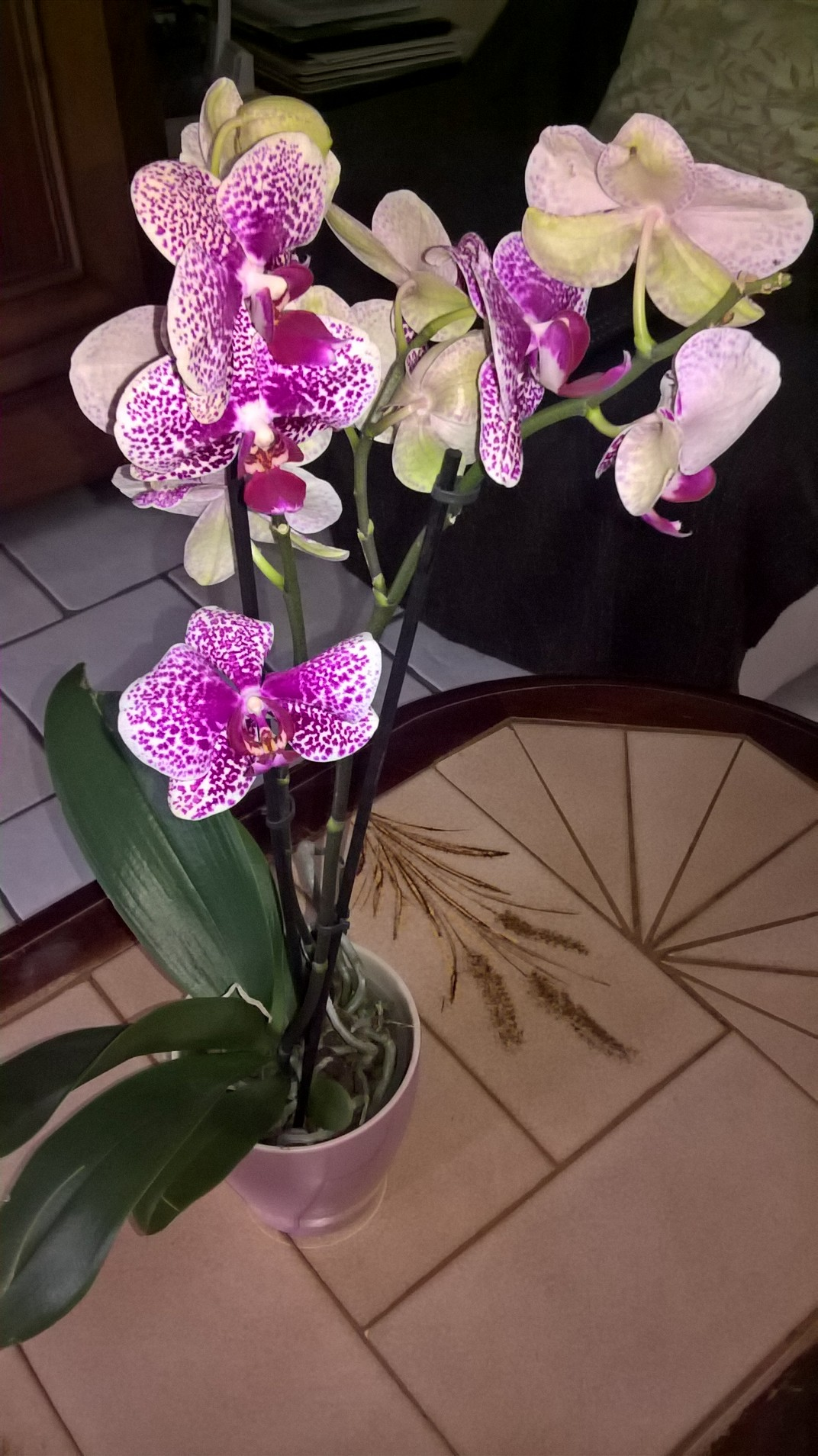 les orchidées d'Edith 904340fleur2