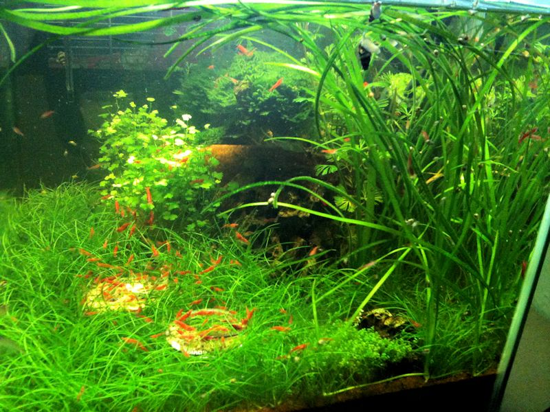 Mon Scaper's Tank 50L Aquascaping - Page 2 904615IMG0781