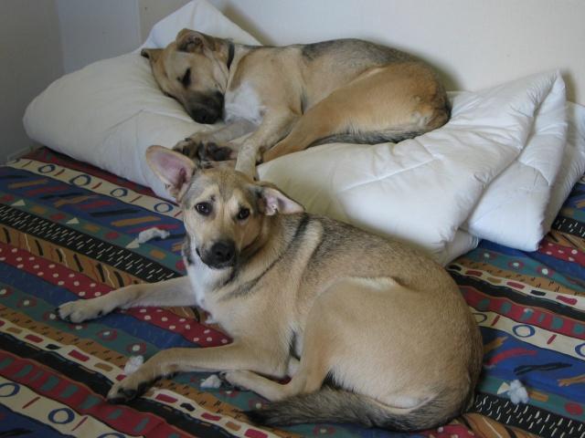 Lila, adorable chienne croisée, née en octobre 2011 905573IMG9317