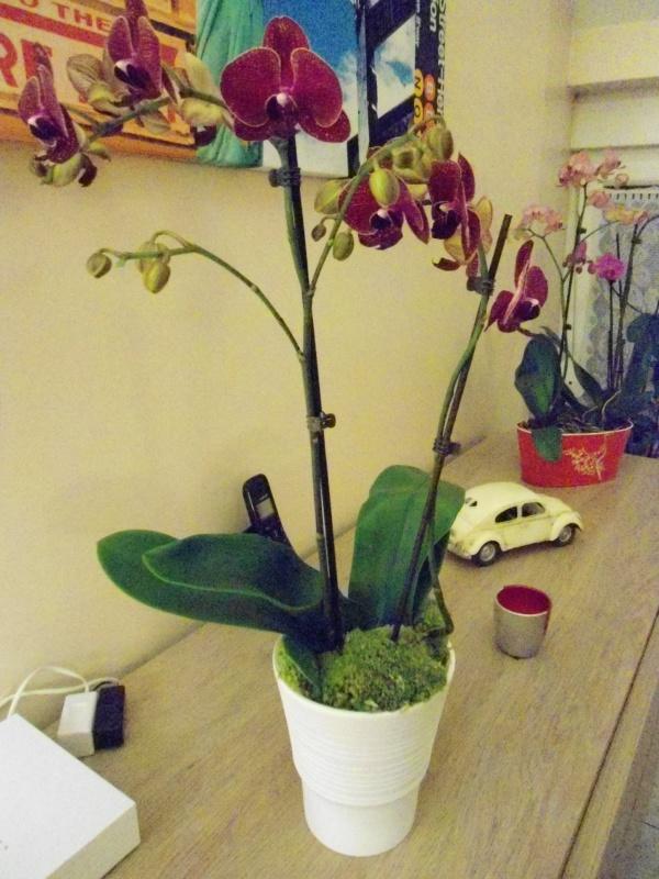 Visite chez Floralux en Belgique 907292DSC00716
