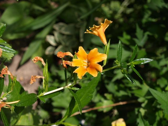 jolie fleur orange 909594P7048892