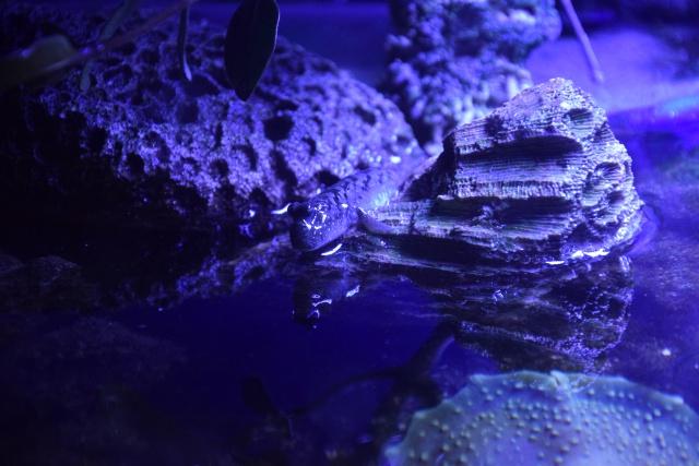 Le nouveau bac du Poissonpané : aquaterrarium de 900L / Nouvelle Calédonie - Page 2 909979DSC0082