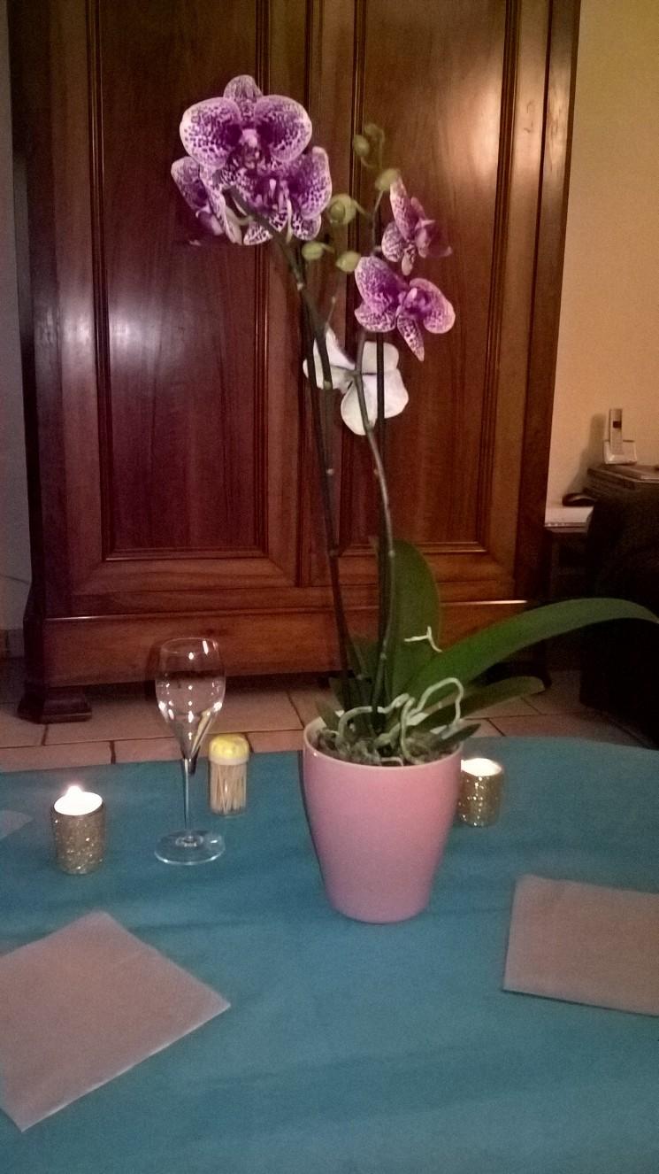 les orchidées d'Edith 911171fleur1