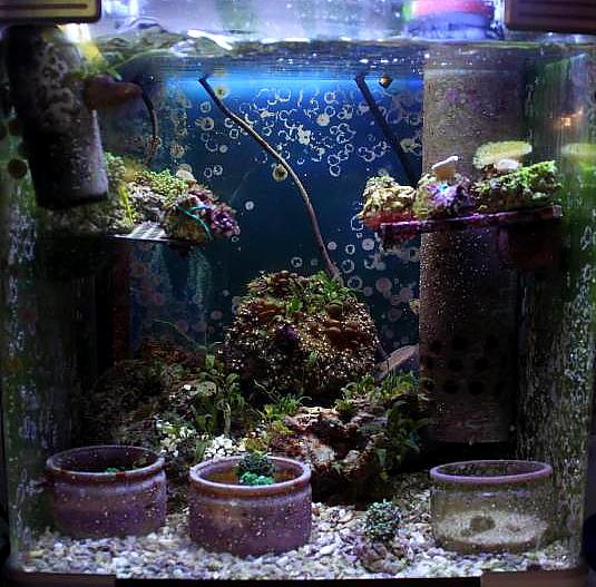 je risque fort de devenir une sardinne - Page 12 913639PXR_IMG_0057