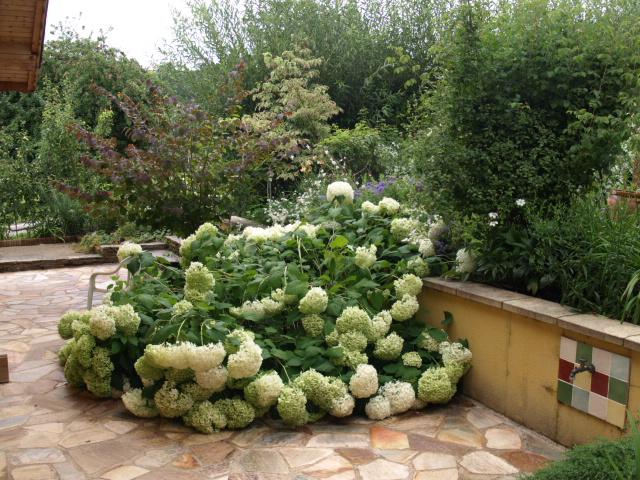 le jardin des plantes du mourot 914748P7202035