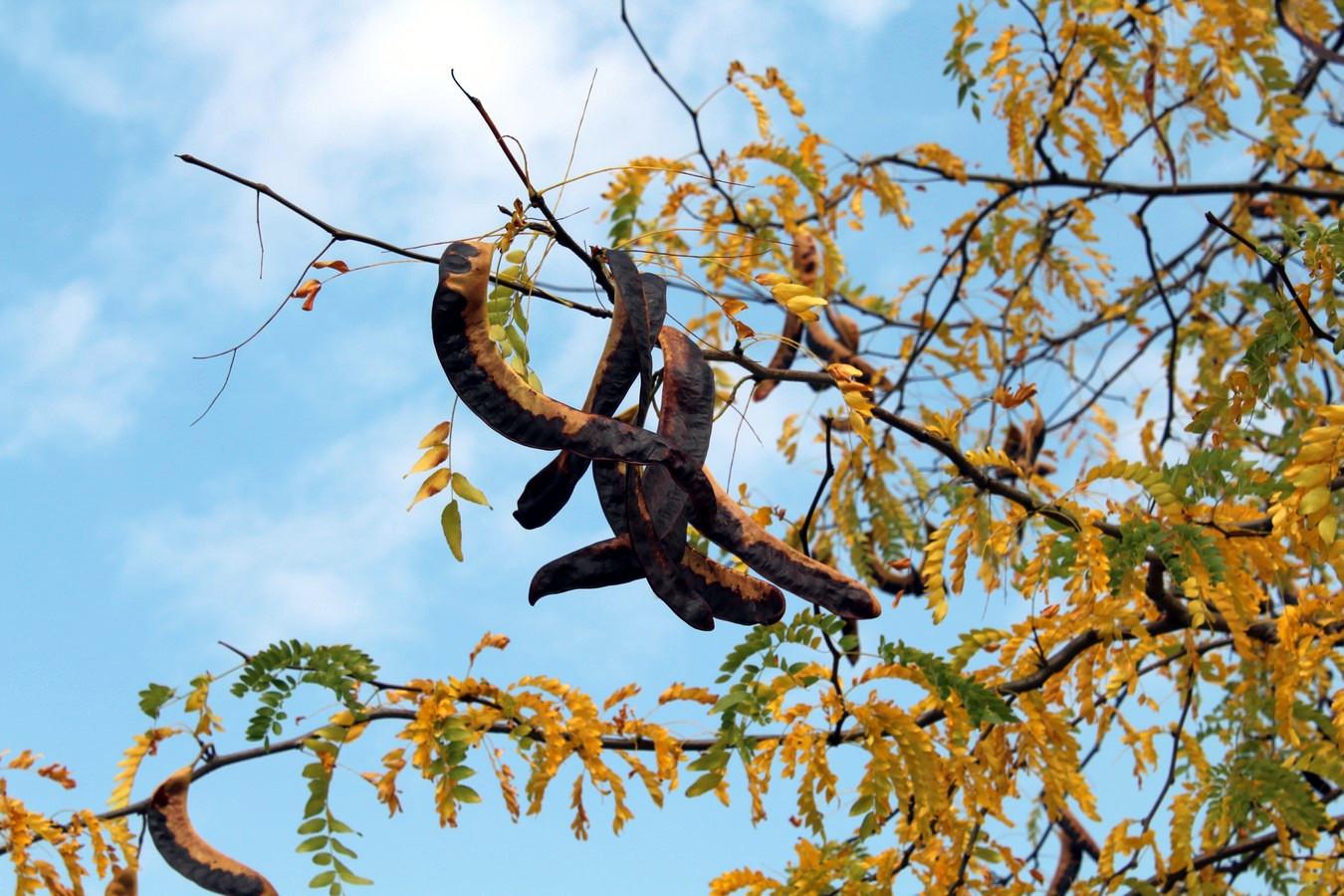 [Fil ouvert] Fruit sur l'arbre - Page 9 915028096Copier
