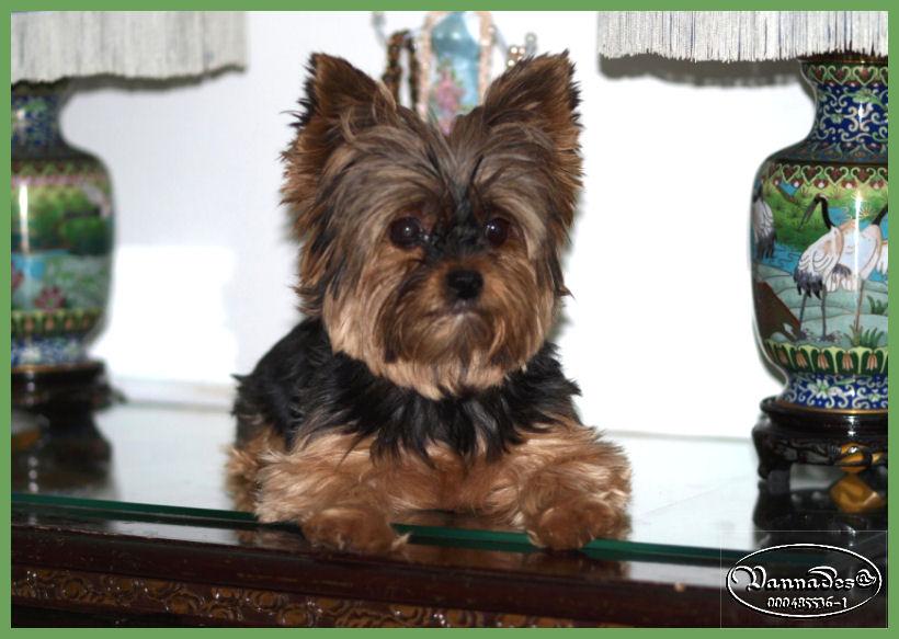 HOMMAGE pour mes Sept chiens 915591taelia