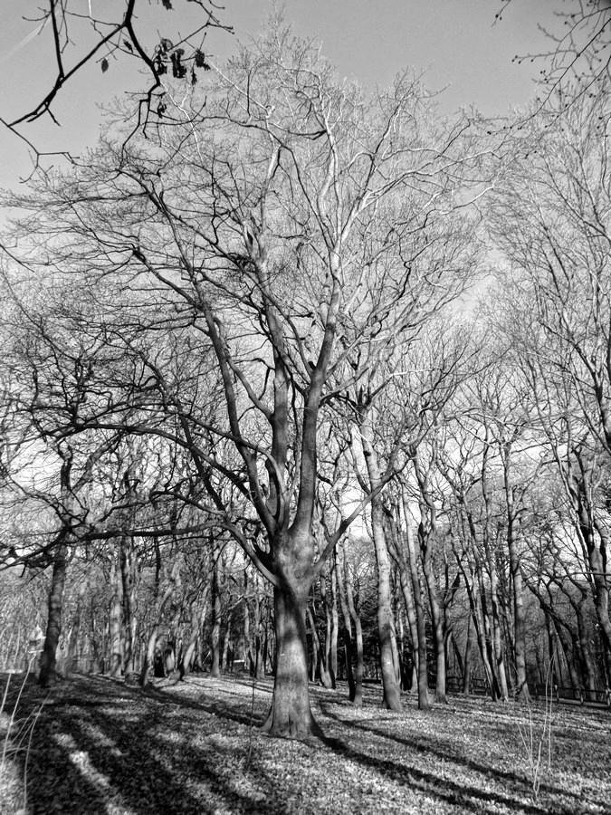 [fil ouvert] la forêt dans tous ses états - Page 13 918337052Copier