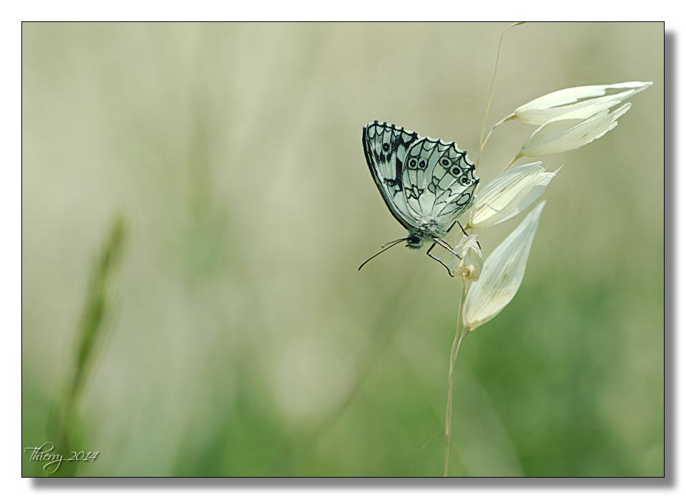 Fil ouvert - Proxi - Papillons 919805macro1
