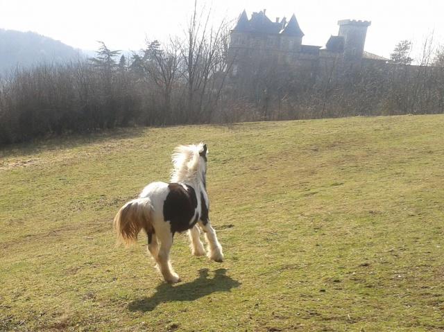 "Concours : ""cheval au galop"" GAGNANTE : TItâne 91990520120310145232"