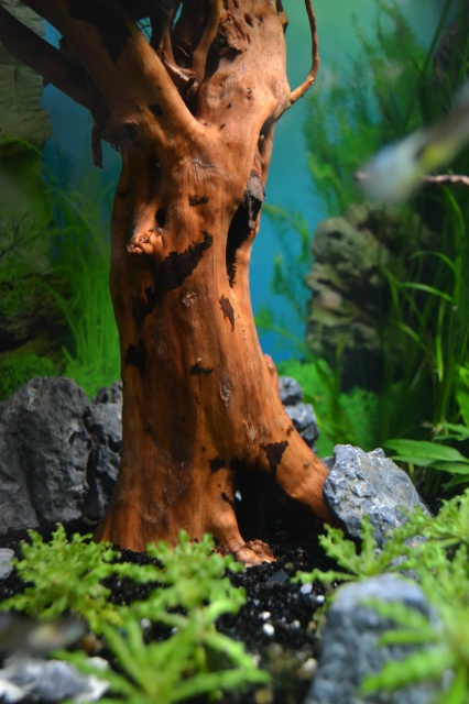 MES AQUARIUMS 240 L Communautaire et 30 L Aquascape + photos - Page 3 9211545204