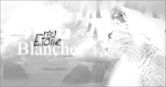 Galerie du Soleil ♪ 922842EtoileBlanche