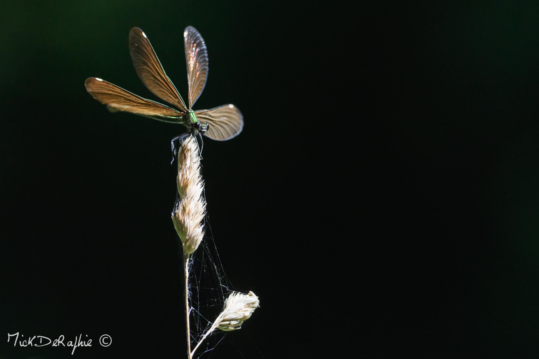 Insectes et Proxi. [Fil Ouvert] 924630DSC0889