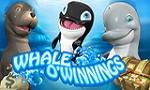 whale-o-winnings
