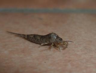 insecte pour film d'horreur 934903Grrrrrrrrrrr