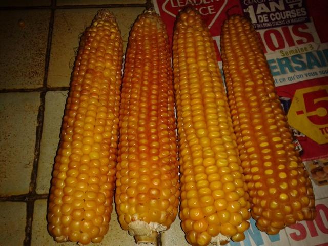 date de recolte du mais grain - Page 2 93587020131011201849