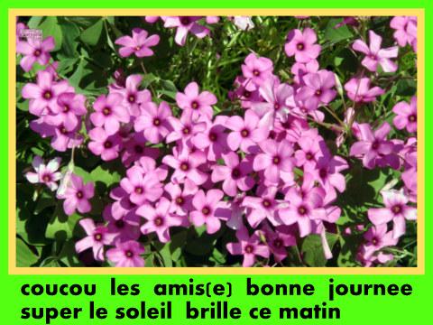 Bon Mercredi 936953treflefleurroseoxalide