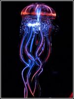 Vie du forum 939854Jellifish