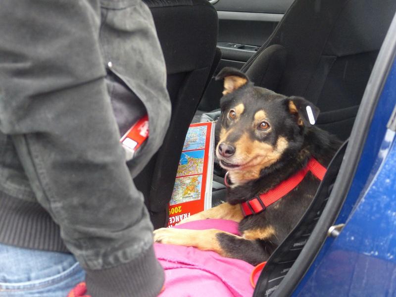 Negrutza, un amour de chienne, 2 ans environ - Page 2 940425P1030249