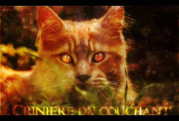 [Libre] Crinière du Couchant ♂ Guerrier 34 Lunes [Partiel] 940704cdc