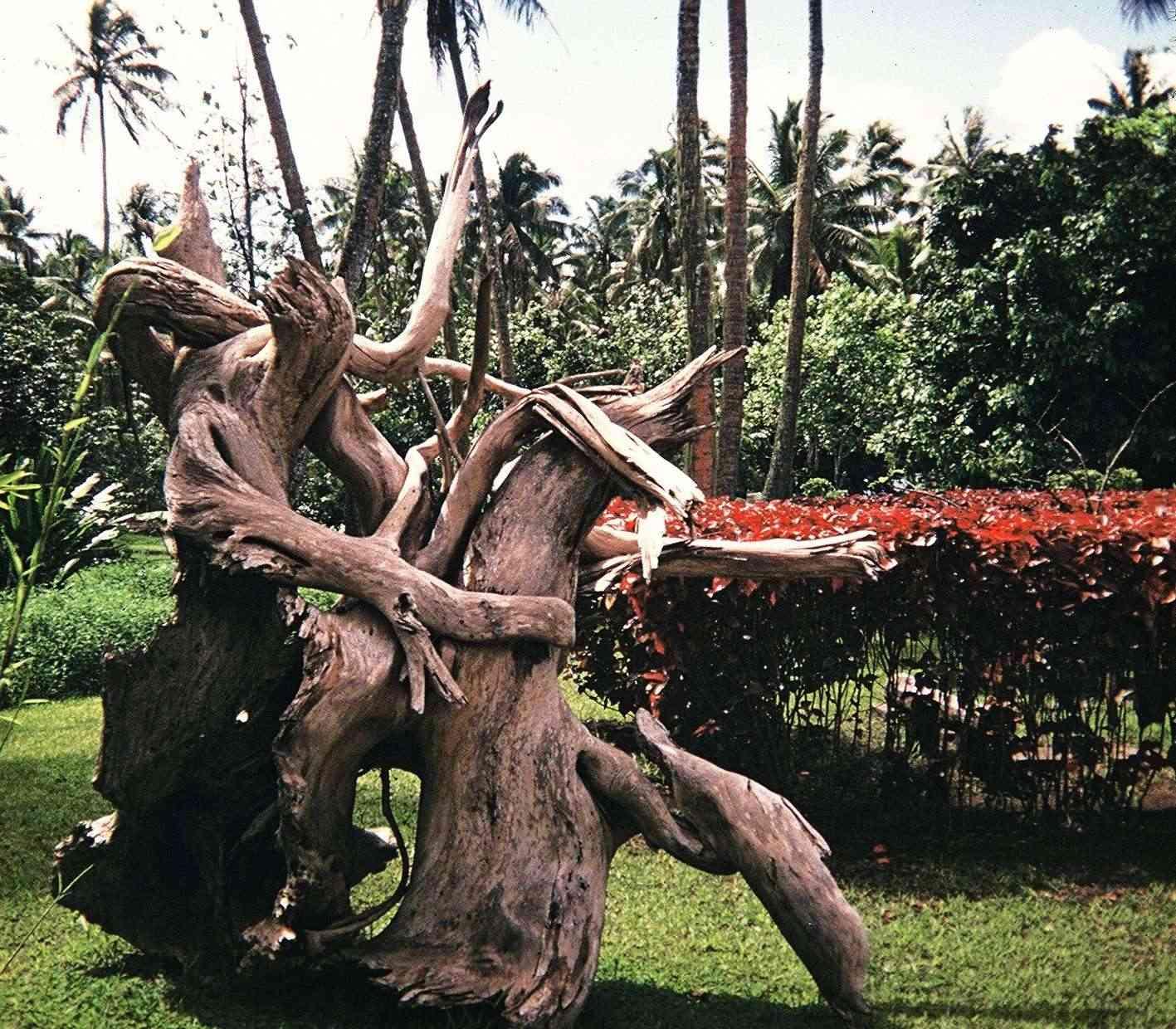 [Tahiti] Il n'y avait pas que le front de mer a Tahiti - Page 6 943257622