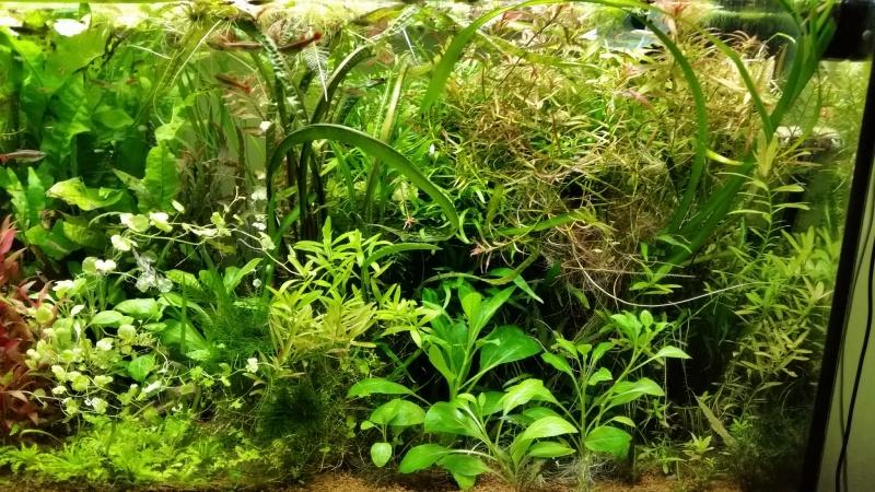 Mes (plus) de 60 plantes dans mon 240 litres - Page 7 94332320150315074541