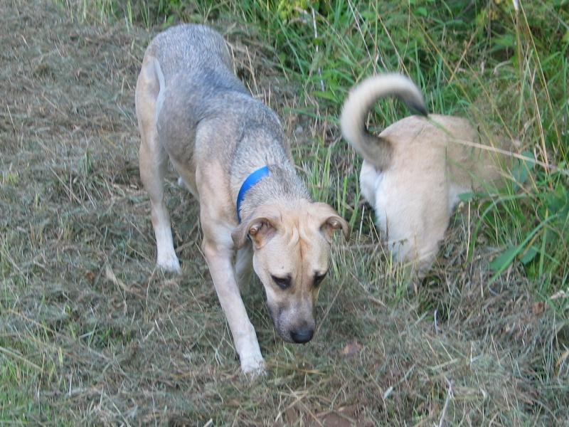 Lila, adorable chienne croisée, née en octobre 2011 945157IMG9499Copie