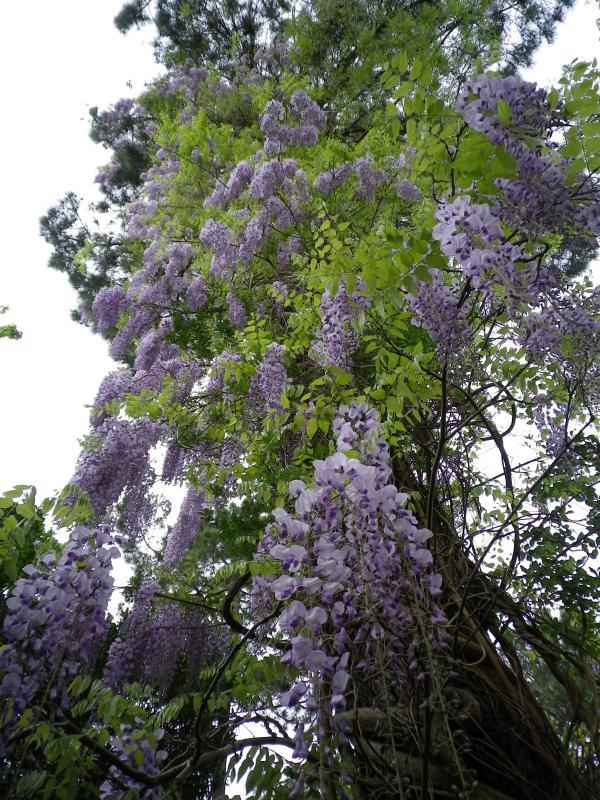 Quelques floraisons 945184IMGP1438