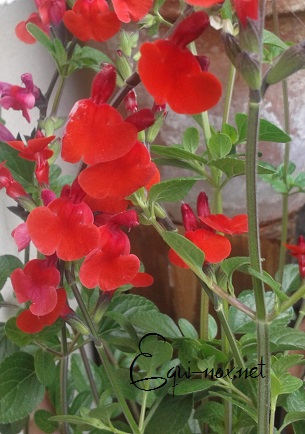 Tutoriel : les plantes magiques 945341royalebumble