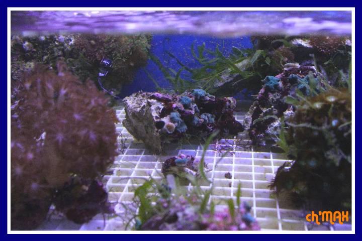 ce que j'amène en coraux a orchie  945858PXRIMG0020GF