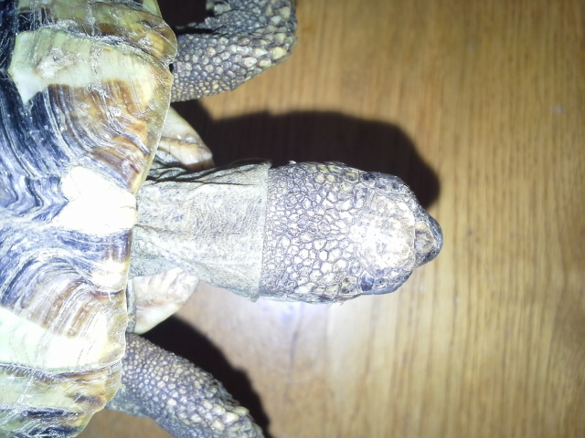 Identification de tortue terra 950086201407051210471