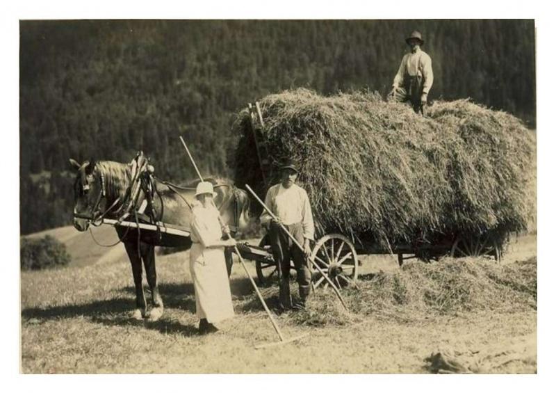 Petite histoire de l'énergie, son rôle en agriculture dans l'histoire - Page 2 950308foin1