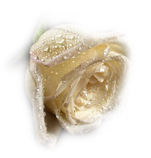 Tubes roses 952966fb5014d2