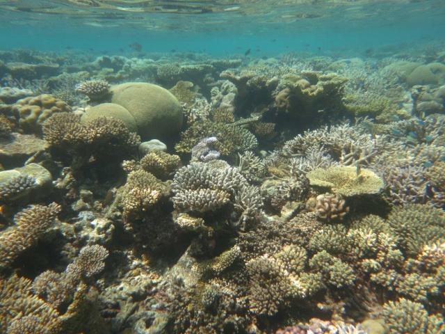 Quelques photos de mes dernières vacances (Maldives) 953918IMG3392