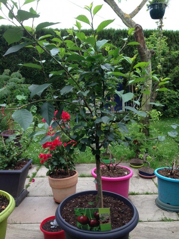 fruitier en pot free image intitule grow fruit in pots step with fruitier en pot cheap serre. Black Bedroom Furniture Sets. Home Design Ideas