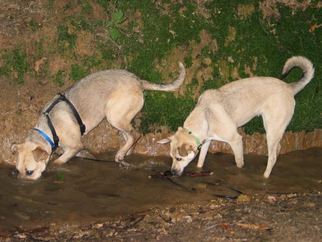 Lila, adorable chienne croisée, née en octobre 2011 957231IMG9348
