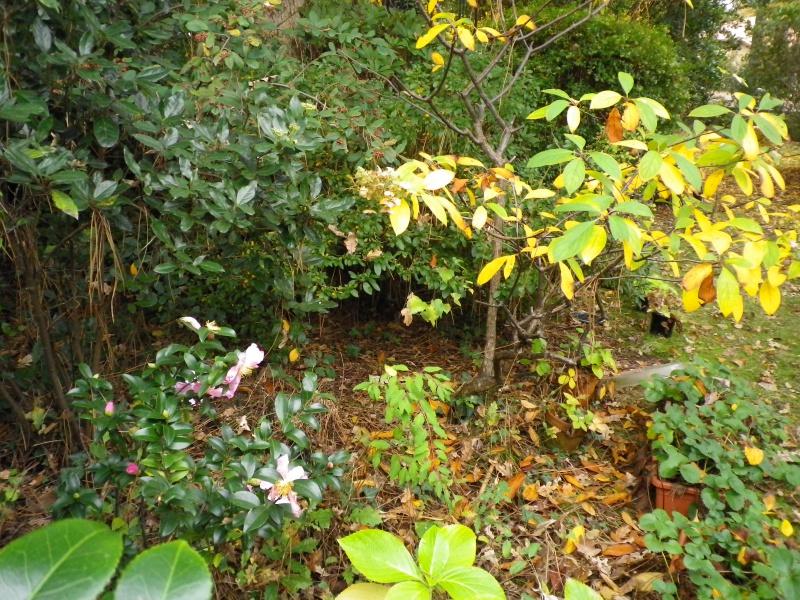 Couleurs d'automne, petit moment d'émerveillement 960045IMGP4193