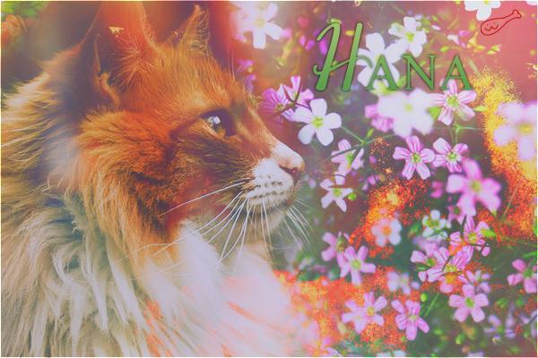 Dawn Dreamers | ft. Hana & Equinoxe d'Automne 960324Hana216