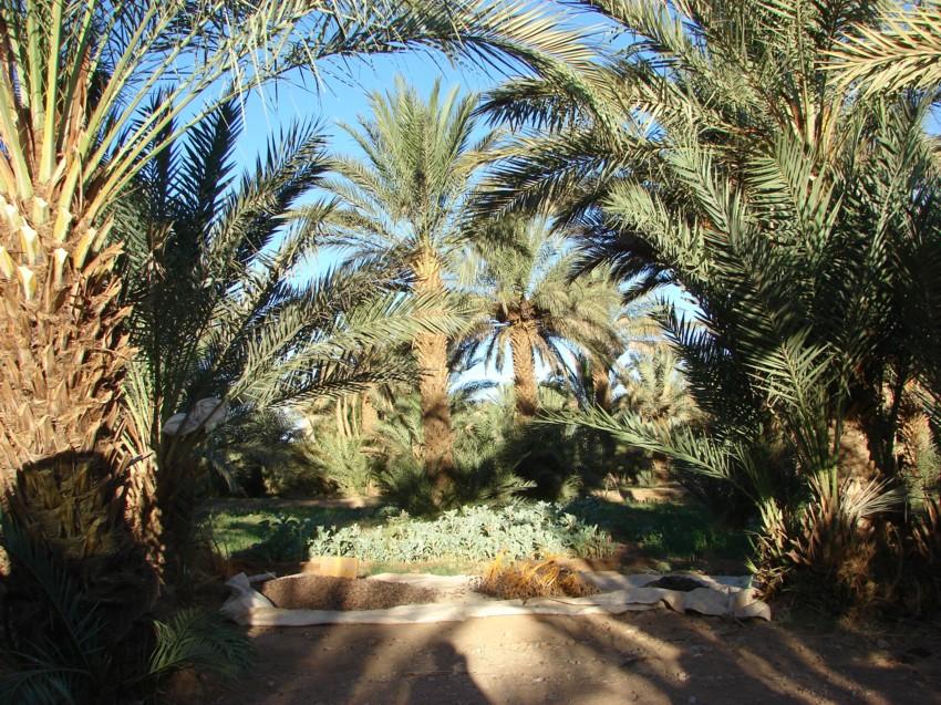 retour maroc 2012 - Page 2 960994152