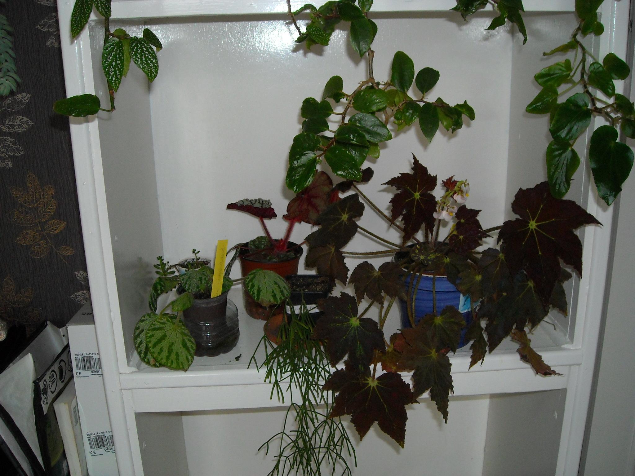 un aperçue de mon HLM 961008ensembledemesplantes004