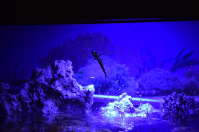 Le nouveau bac du Poissonpané : aquaterrarium de 900L / Nouvelle Calédonie - Page 2 963057DSC0245
