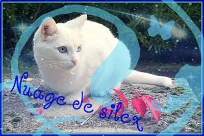 Discution avec une Menthe (PV. Nuage de Minuit et Petite Menthe) 963256Nuagedesilex