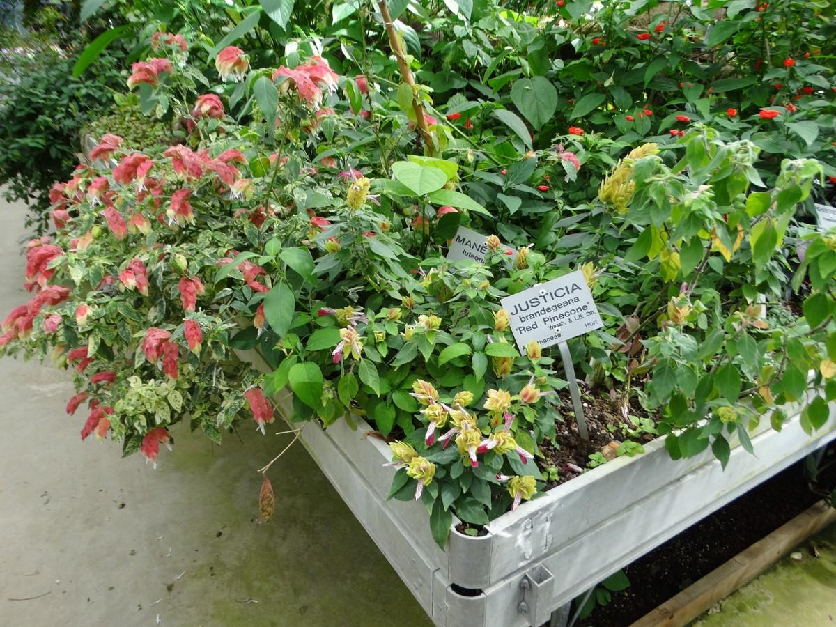 [Fil ouvert] Fleurs et plantes - Page 6 965835141Copier