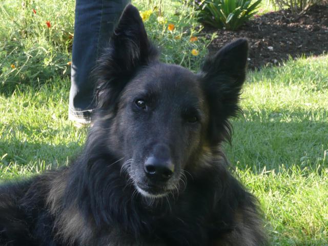 Adieu mon vieux chien 965958P1040070